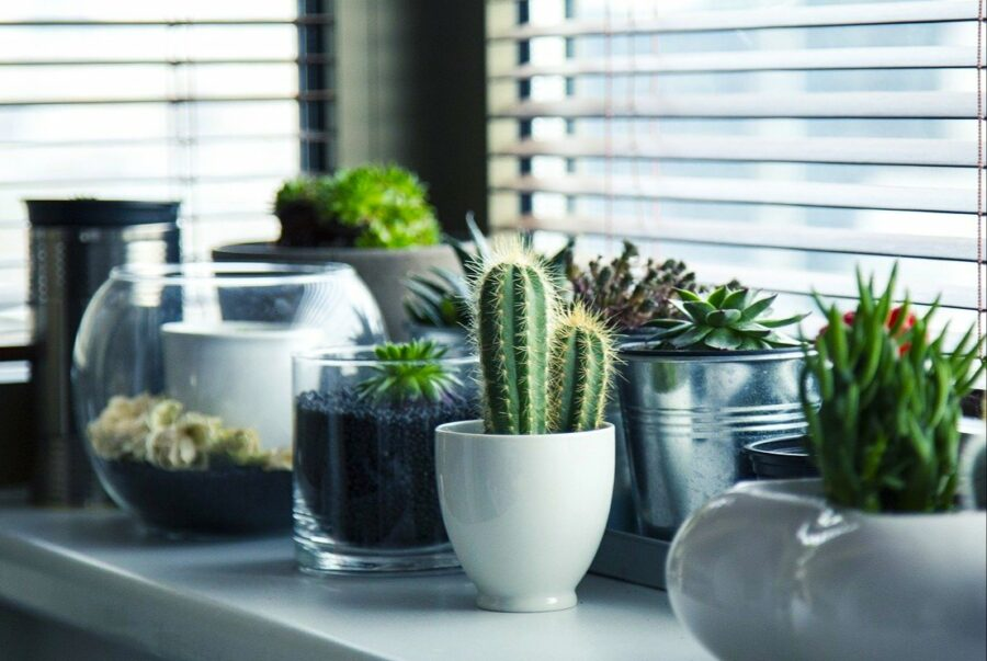 Cactus In Pots Without Drainage Holes
