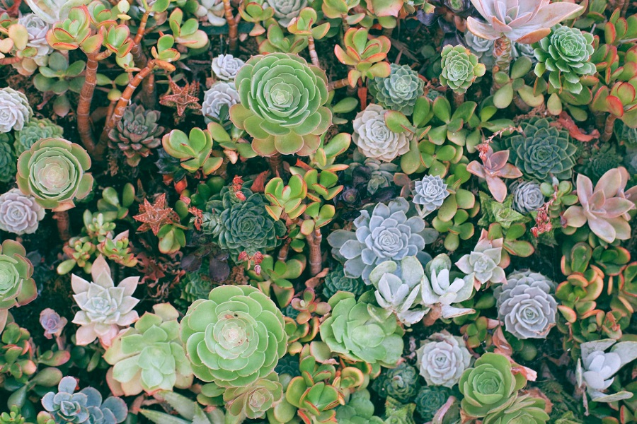 water succulents and cacti